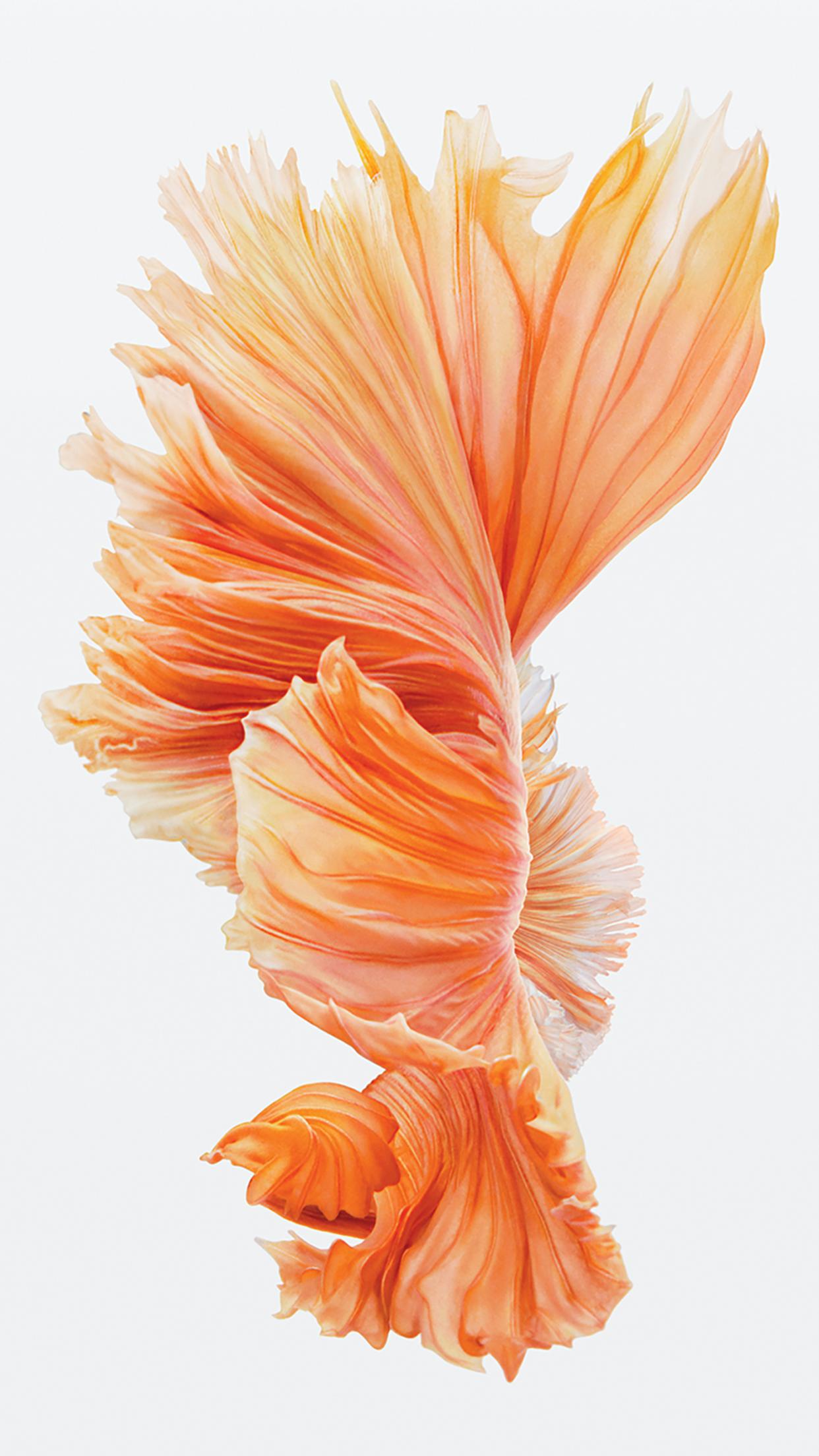http://media.idownloadblog.com/wp-content/uploads/2015/09/iPhone-6s-Fish-Pink-Wallpaper.png