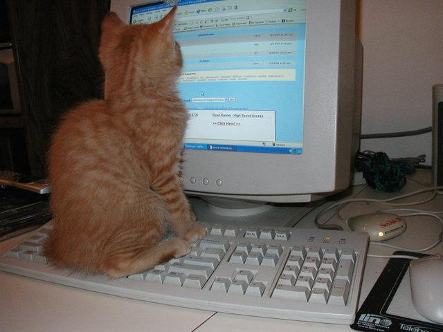 http://manchesterpgcareers.files.wordpress.com/2008/08/cat-on-keyboard.jpg
