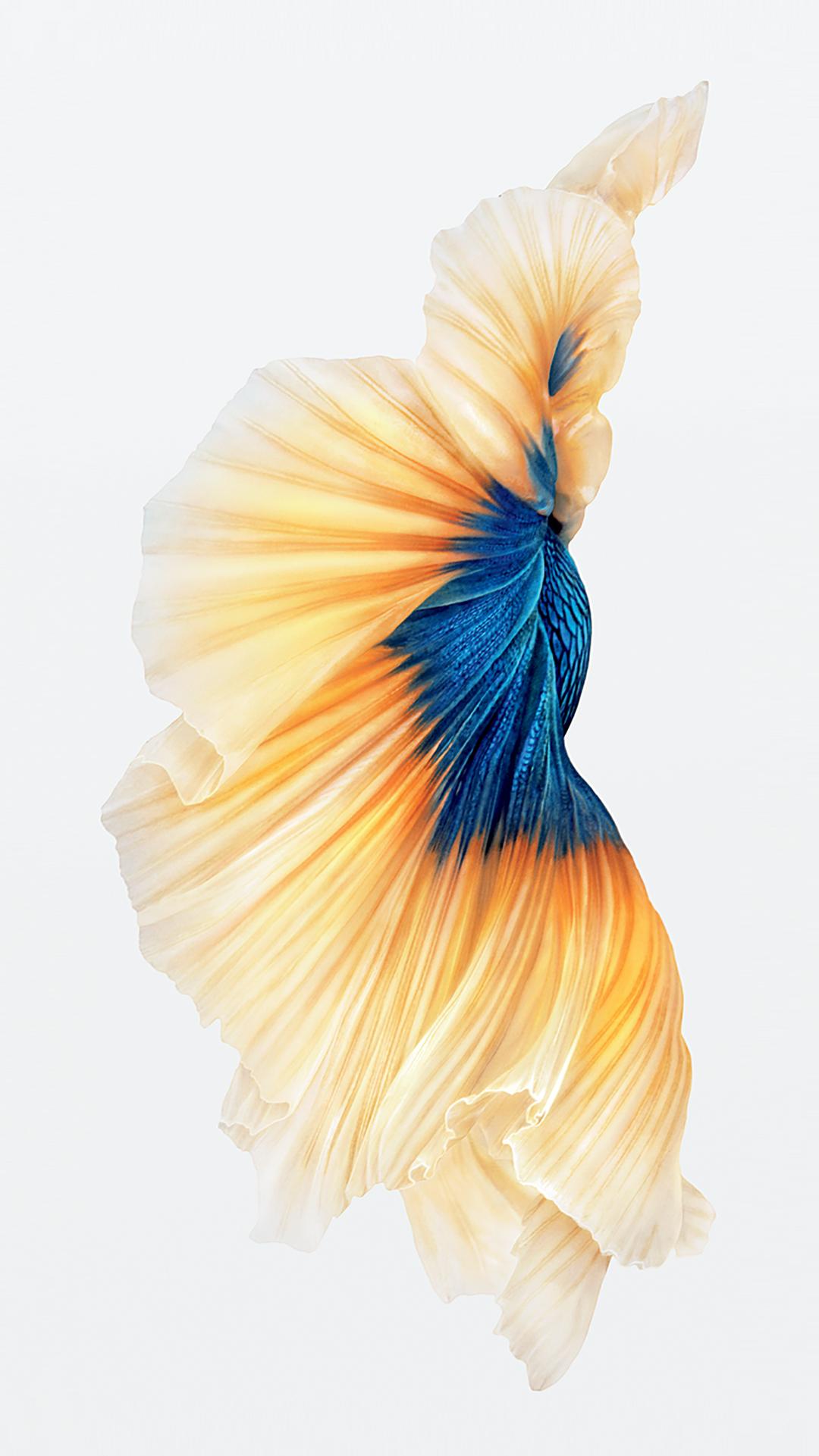 http://media.idownloadblog.com/wp-content/uploads/2015/09/iPhone-6s-Fish-Gold-Wallpaper.jpg