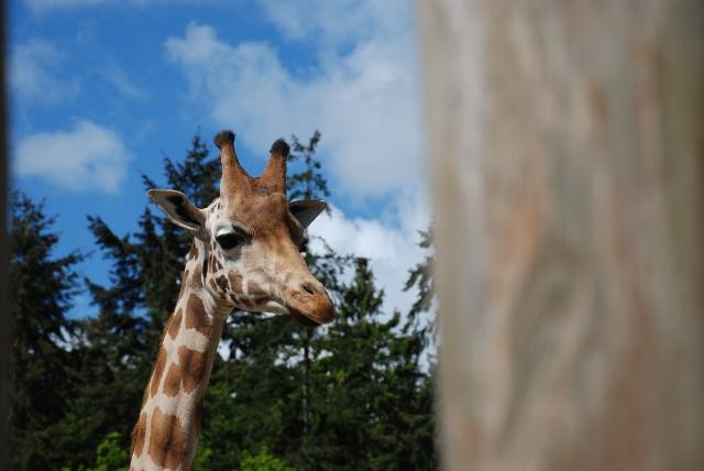 http://www.jeroenen.nl/images/2012-05-12/giraffe-640.jpg