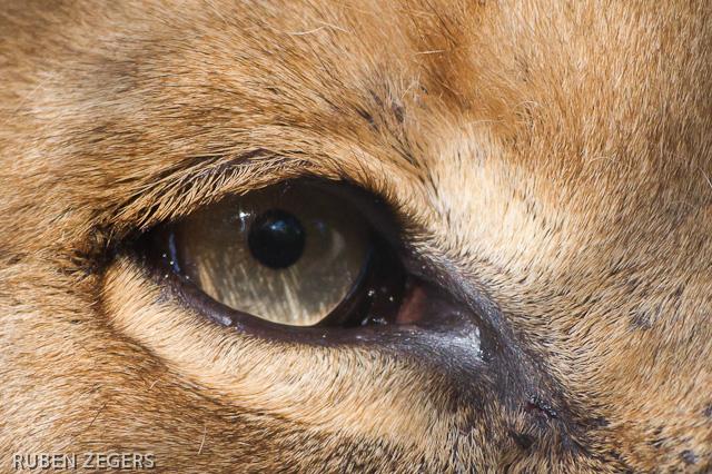 http://www.fotozegers.nl/got/amers/JE7F6082.jpg